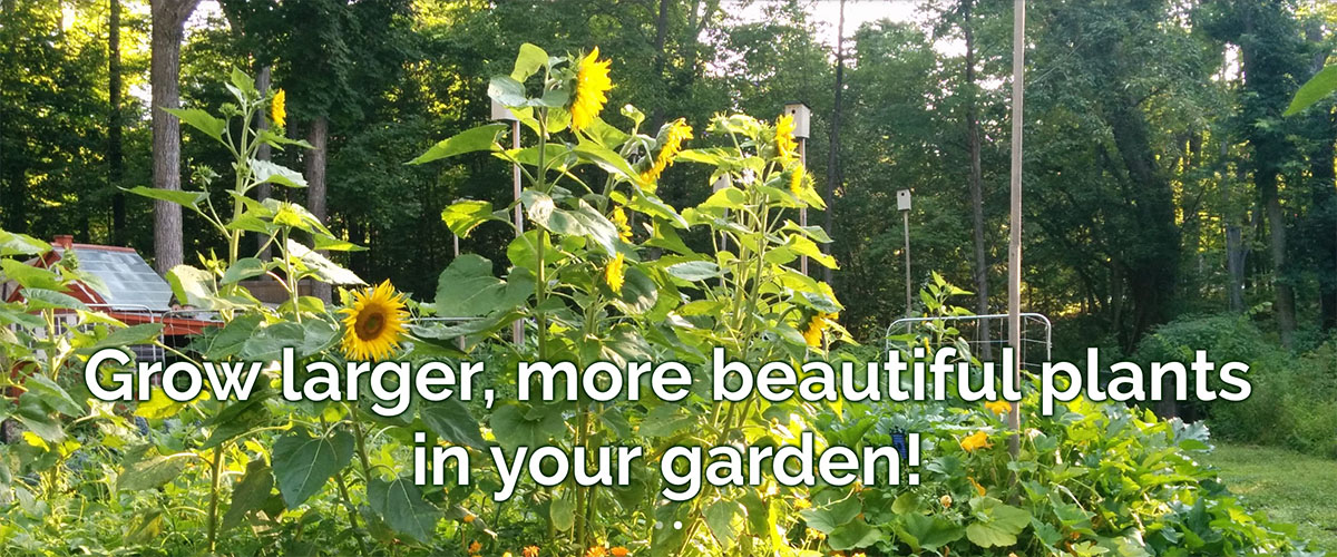 Grow larger, more beautiful plants in your garden!